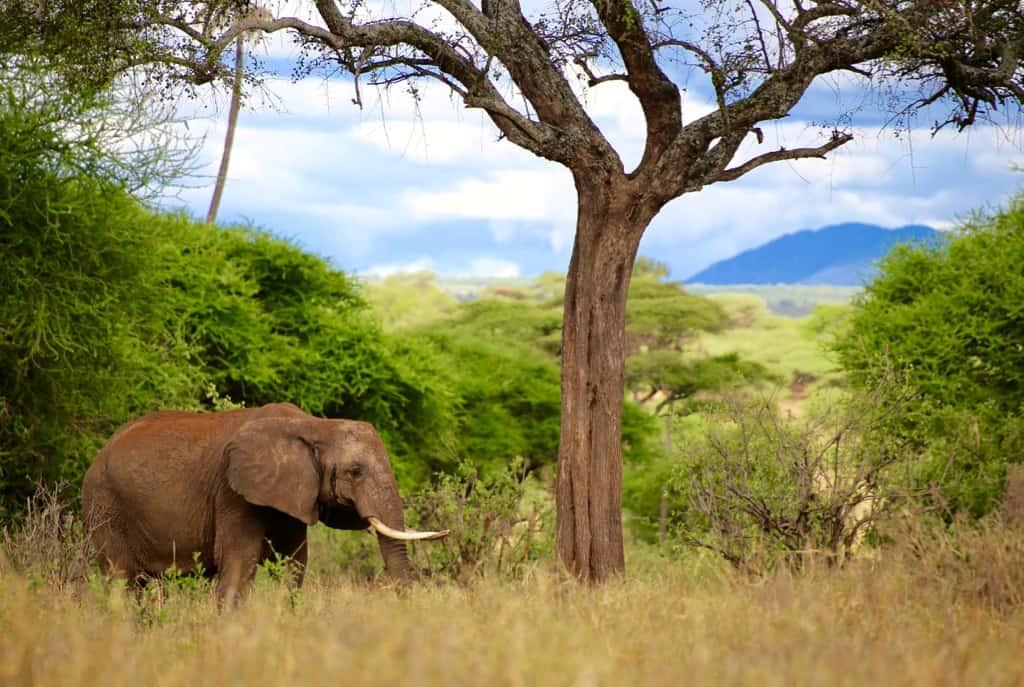 Tanzania itinerary, Tanzania safari itinerary, Kenya and Tanzania safari, Tanzania safari, Tanzania trip, Tanzania holidays, safari and beach holidays, luxury african safari, luxury safari Tanzania, kilimanjaro tour, #Africa #Tanzania