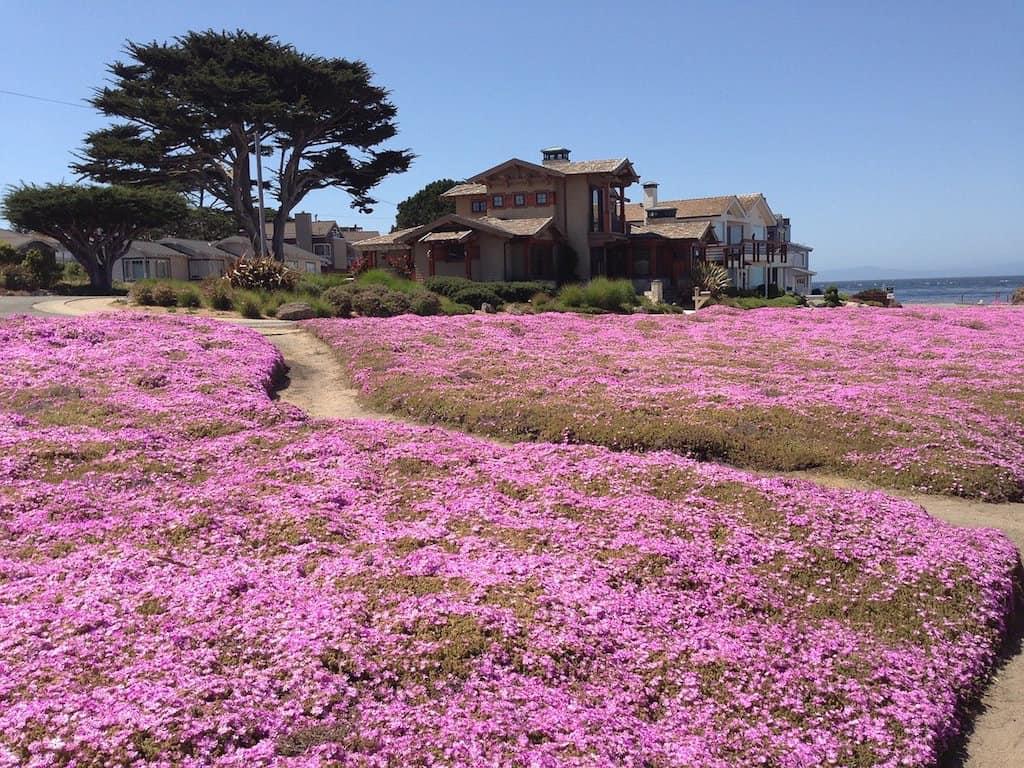 Things to do in Monterey, what to do in Monterey, #Monterey #California #Aquarium