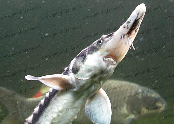 Best Fish Garden Ponds