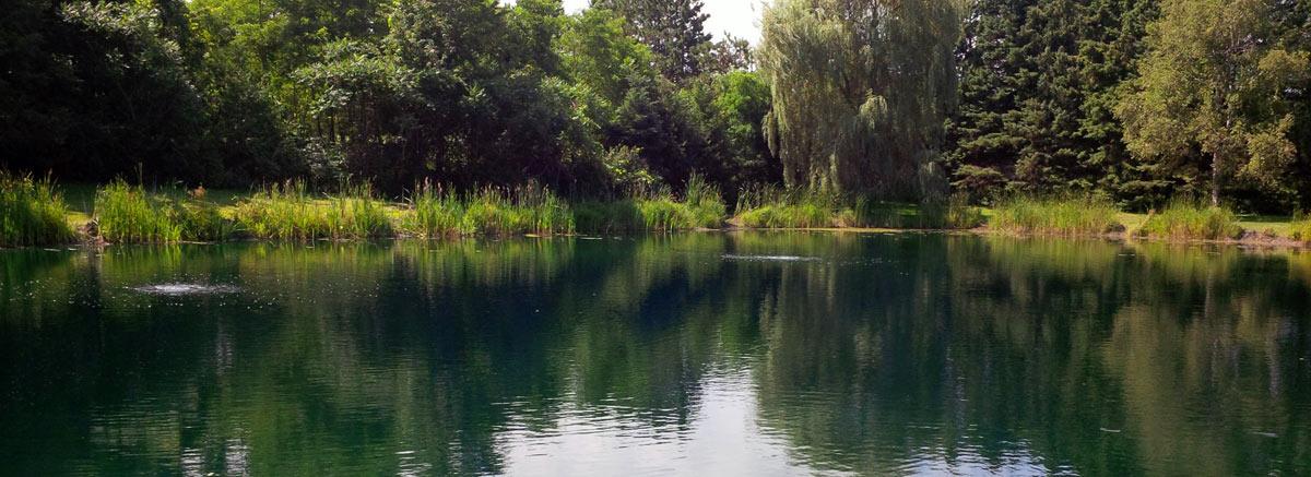 Spring Pond Fed Construction