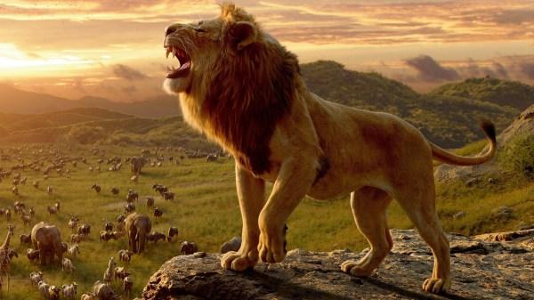 lion king # 13