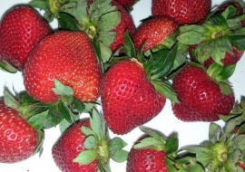 Tuesday Tip: Strawberries on Hot Summer Days