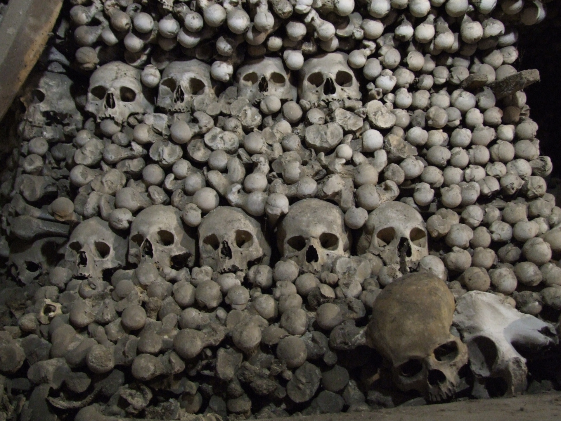 pile of bones - HD1920×1440