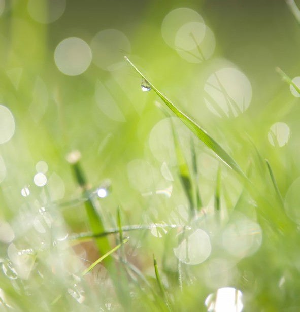 Morning Dew On Grass Free Stock Photo Public Domain Pictures