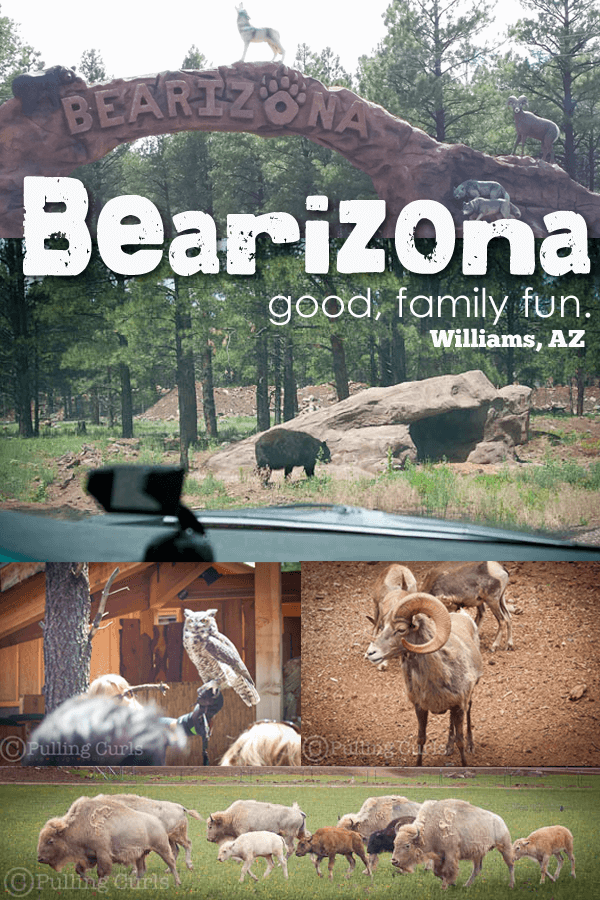 Bearizona is near the Grand Canyon in Arizona. It's a great place to see wildlife!