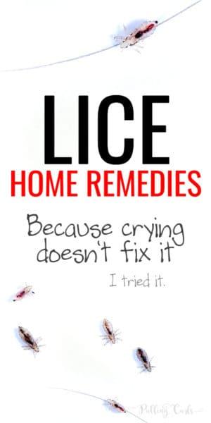 head lice vs dandruff
