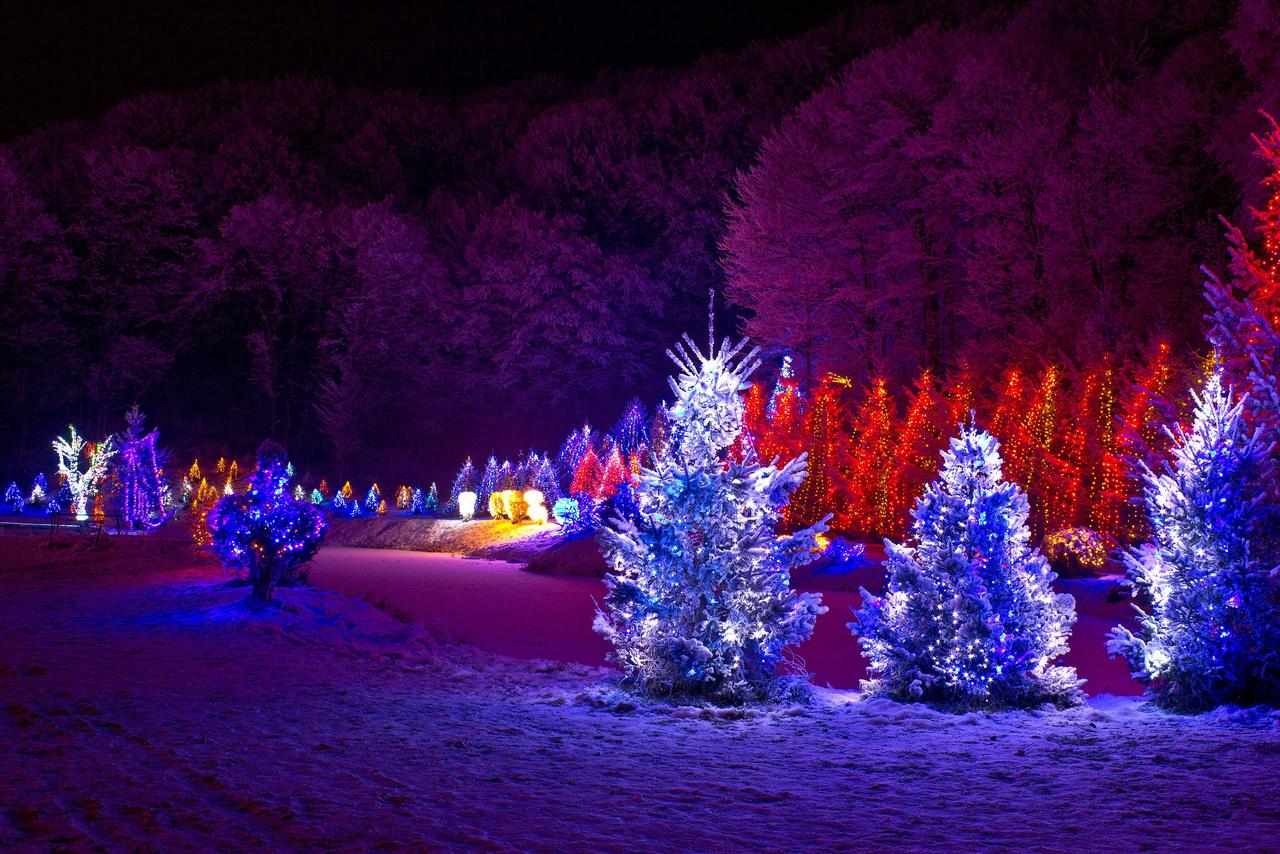 Christmas Lights Outdoor Tree