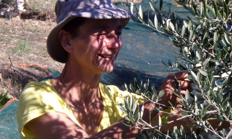 Olive picking walking weeks Pyrgos House Kythira