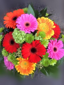 Glorious Gerbera Daisies   Queen Bee Flowers   Vancouver Flower Shop     QueenBeeFlowerShop com Glorious Gerbera Daisies