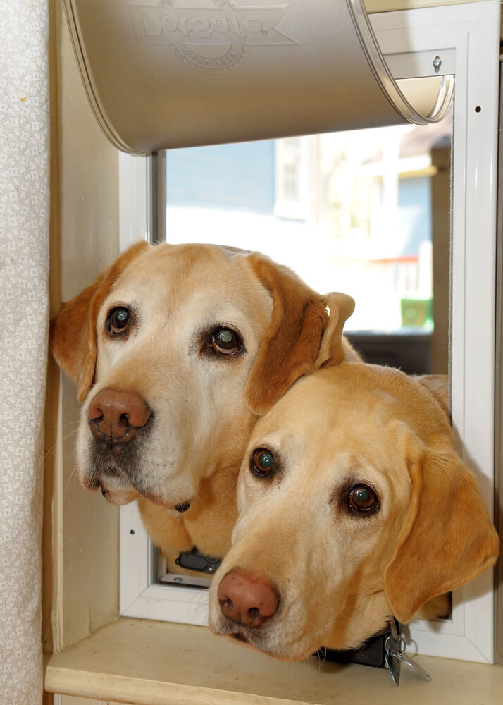 The Dog Trainer How To Introduce A New Dog To Your Dog