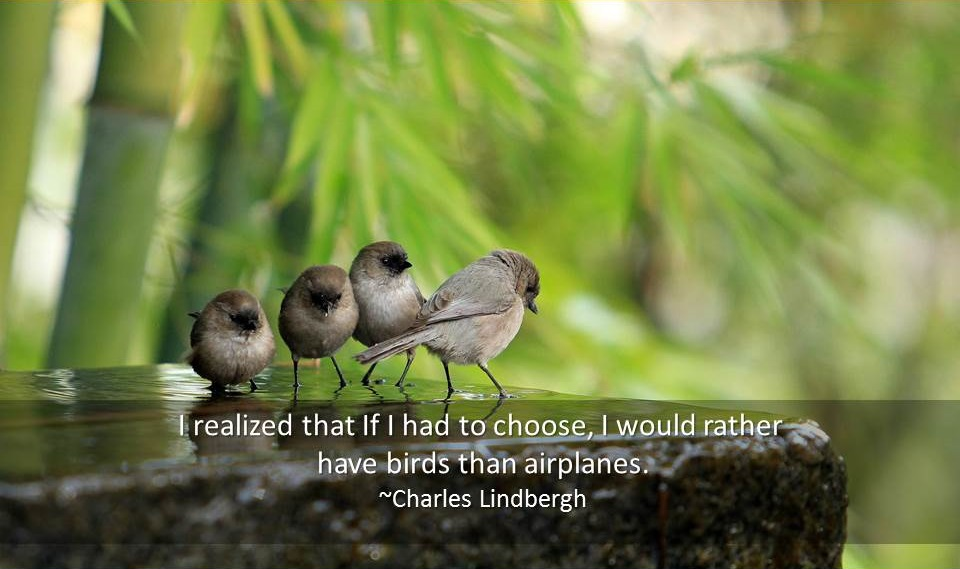 Bird Quotes Quotations About Birds Famous Quotes