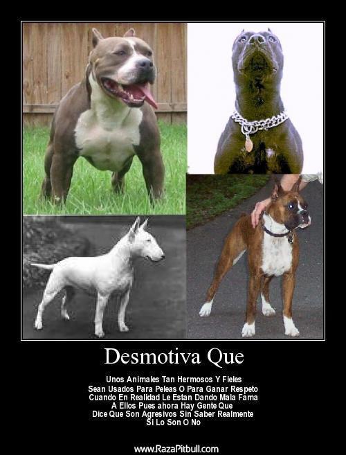 Cara Raza Mas De Perros