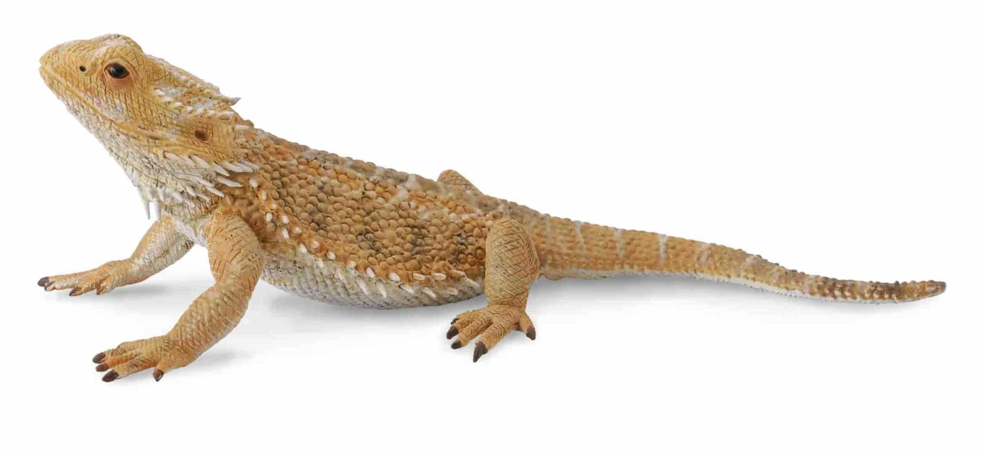 BEARDED DRAGON LIZARD TOY MODEL by COLLECTA 88567 - Red ...