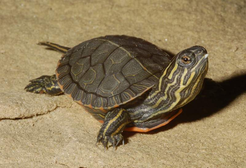 Turtles Baby What Box Eat