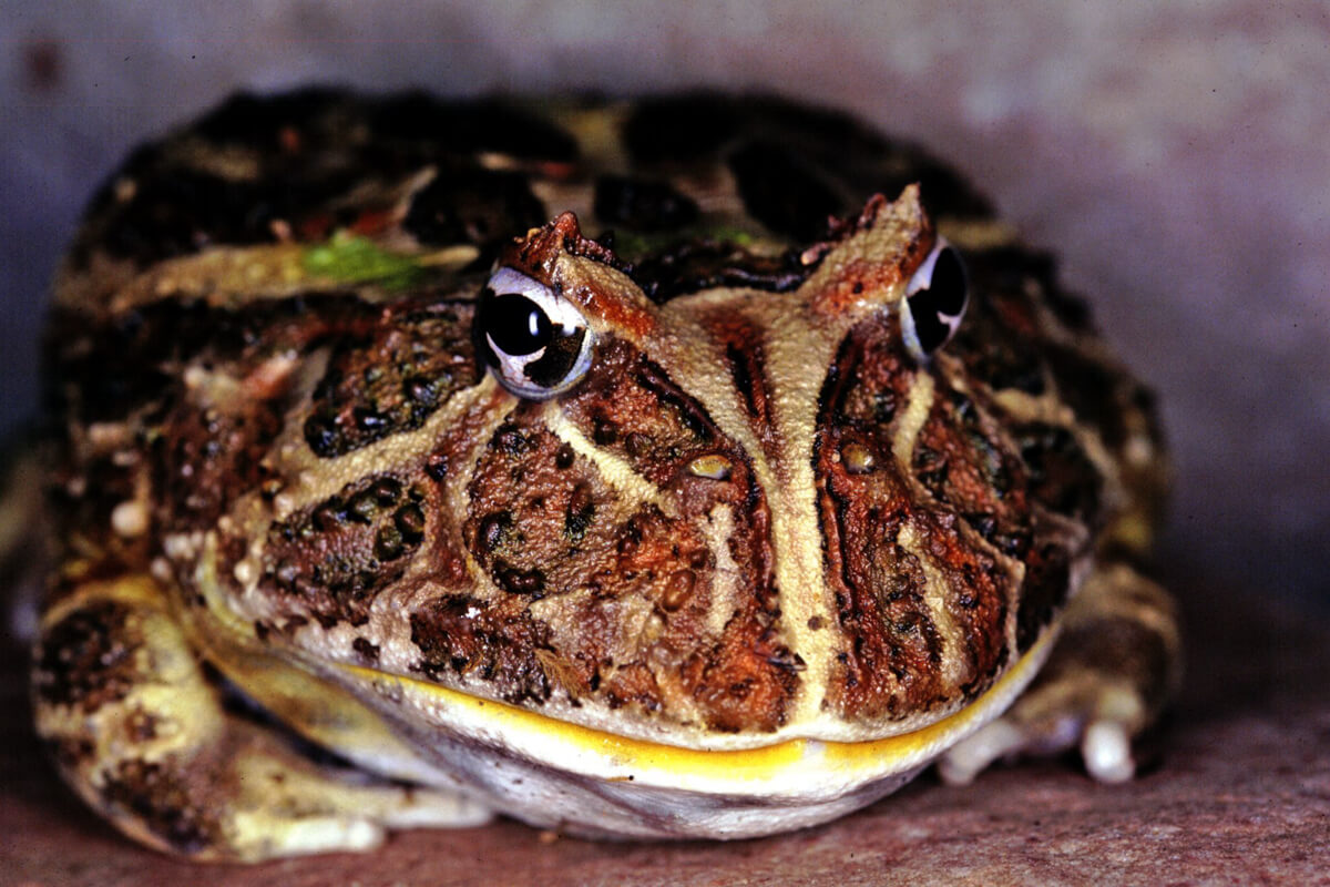 Frog Facts | Black Hills Attractions | Reptile Gardens ...