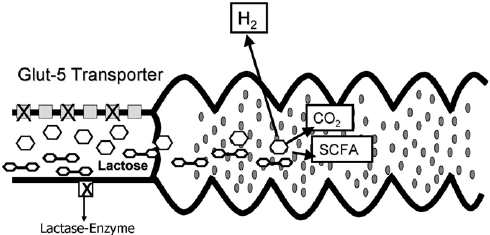 Fermentation reaction of sugar molecules (lactose) in the ...