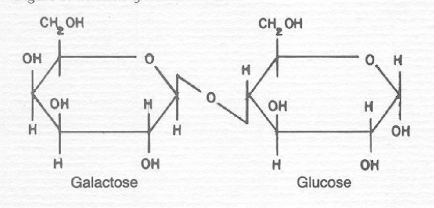 Structure of a lactose molecule. | Download Scientific Diagram
