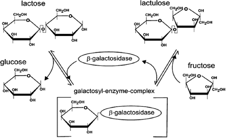 Overview of enzymatic process for conversion of lactose to ...