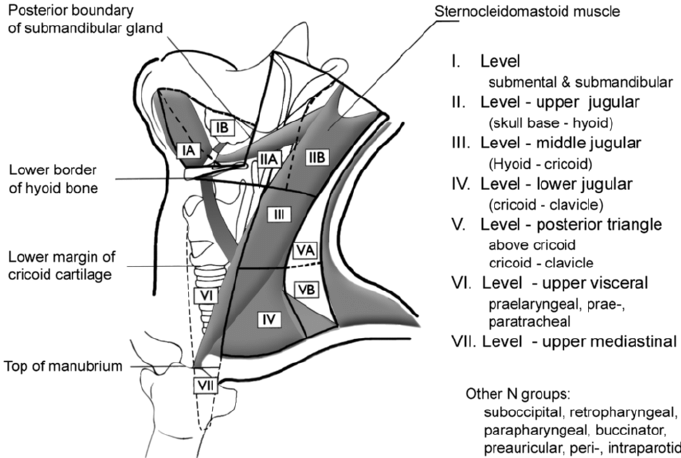 Where Are Your Lymph Nodes Located Posterior View