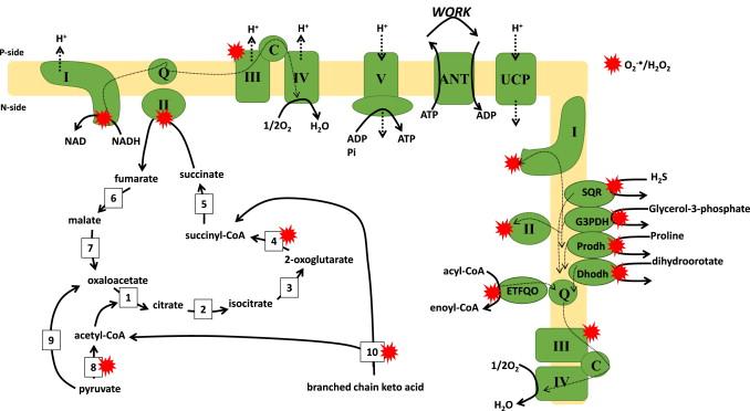 Atp Cycle Diagram Figure 9 2