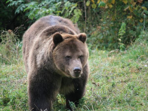 Guyana Wildlife Animals
