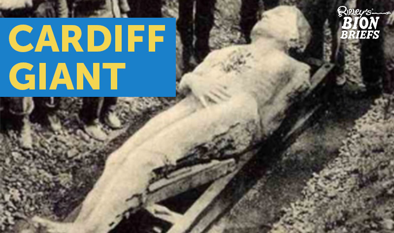 The Cardiff Giant A Stone Man S Secrets