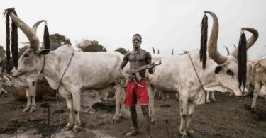 Fulani herdsmen, have allegedly sacked villages in a local government area of Kaduna State.