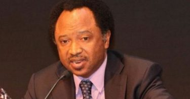SEN SANI TO BUHARI: Stop govs' sycophantic visits to Villa leaving their people for gunmen to kill