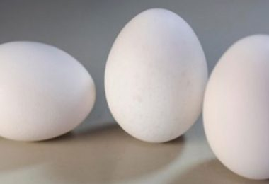 Japanese scientist uses protein from egg white to produce carbon-free energy