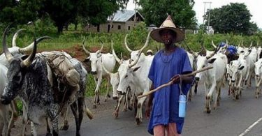 Rampaging herdsmen continue killing spree in fresh attack on Benue community