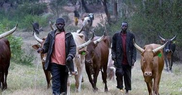 Three herdsmen arrested for killing farmer in Ogun