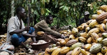 Buhari signs 2010 International Cocoa Agreement