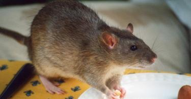 Lassa fever claims 2 lives in Ebonyi, 10 other cases recorded