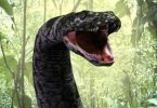 Snake chases lawmakers out of plenary in Ondo