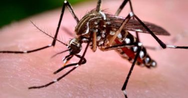 16 feared dead as yellow fever hits Ebonyi community