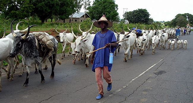 Miyetti Allah bans night grazing in Nasarawa, prohibits kids from moving with cattle