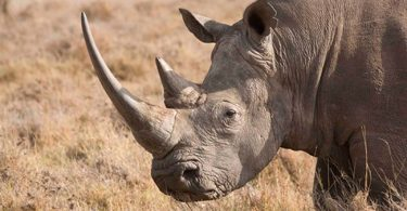 Malawi Court convicts seven Chinese, two nationals for illegal possession of widelife species