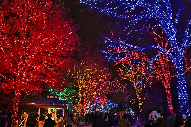 Zoo Lights Maryland