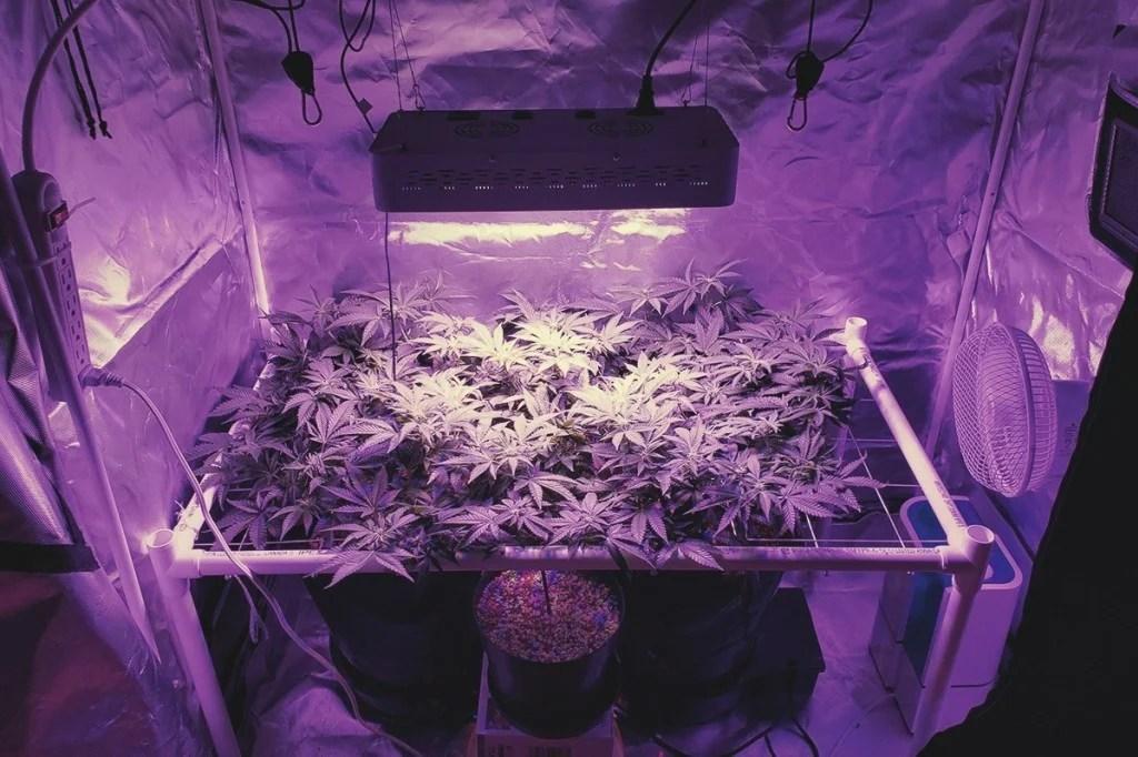 Led Grow Light Veg And Flower