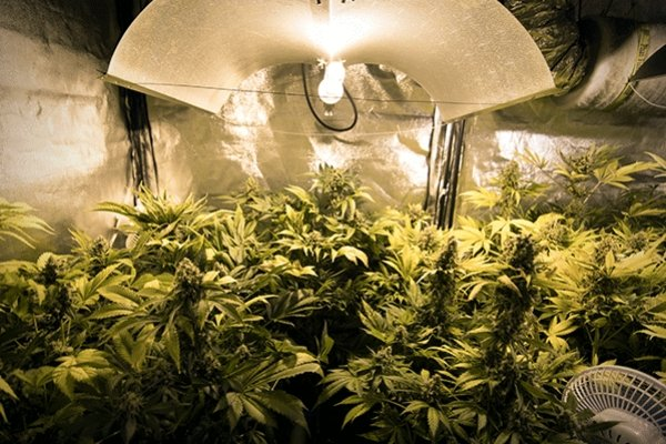 Led Grow Lights Weed