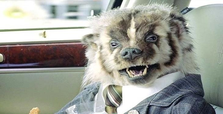 Have You Met The Badger Car Salesman And How To Avoid His 3 Top Manipulation Tactics