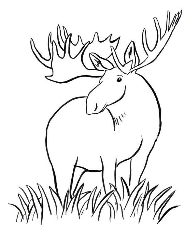 moose coloring page # 4