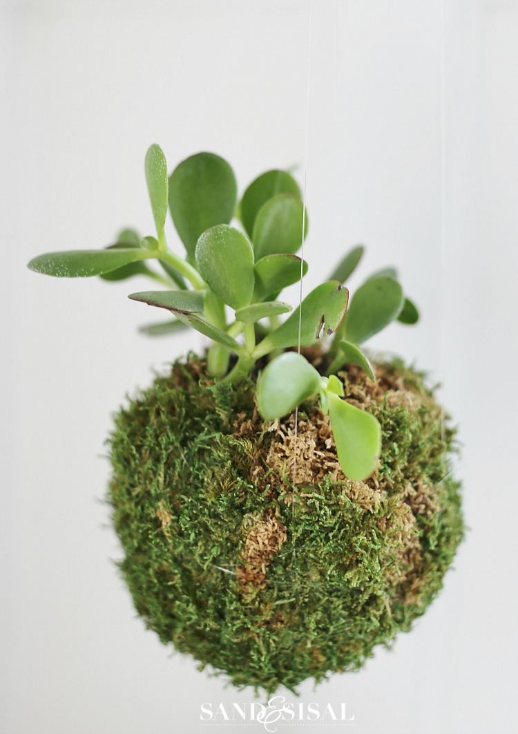 Indoor Plants 2017