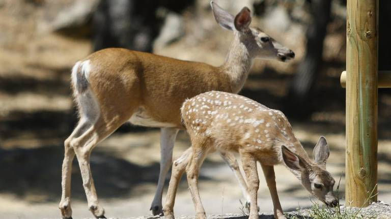 California game wardens used DNA evidence to prove man illegally killed eight deer