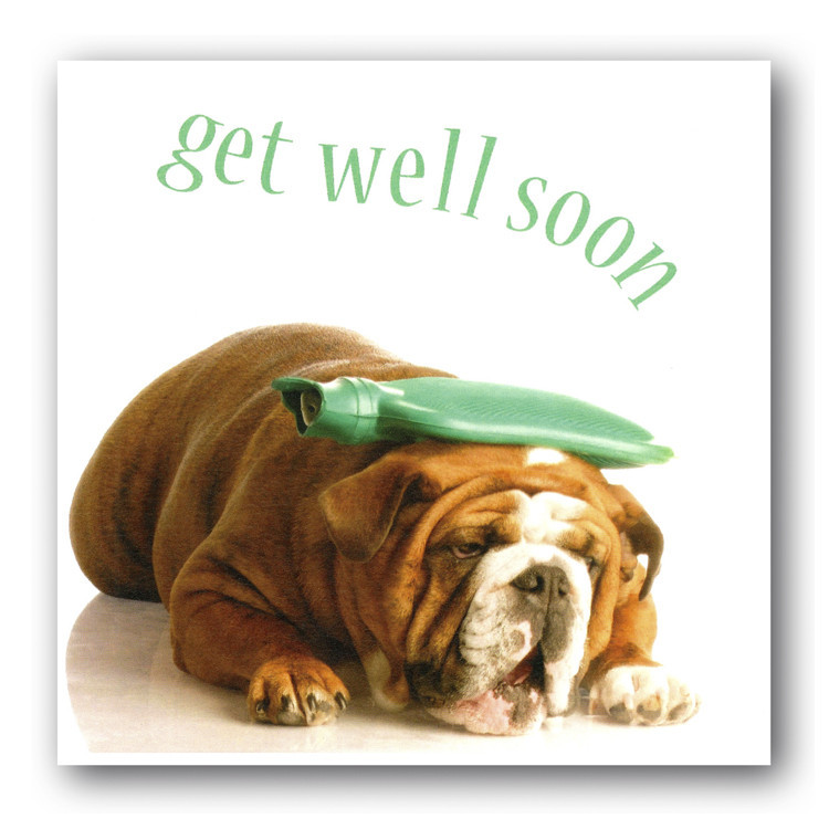 Get Well Soon Puppy Meme 20 Funny Get Well Soon Memes To