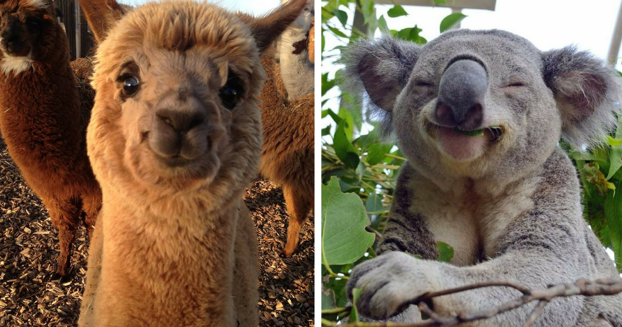 20 Smiling Animals That Will Make You Forget All Your Worries