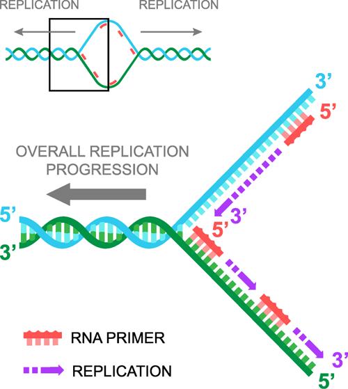 Errors Replication Rna