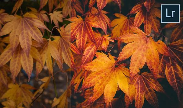 Fall Wedding Leaves