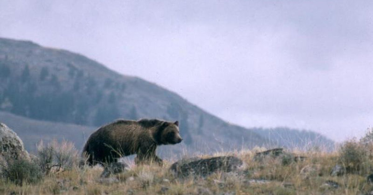 Utah Teen Survives Montana Bear Attack With Minor Injuries