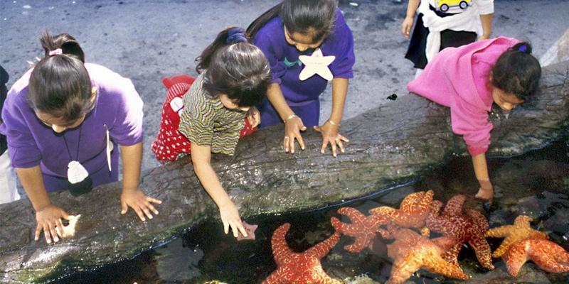Cabrillo Marine Aquarium Tickets Save Up To 50 Off